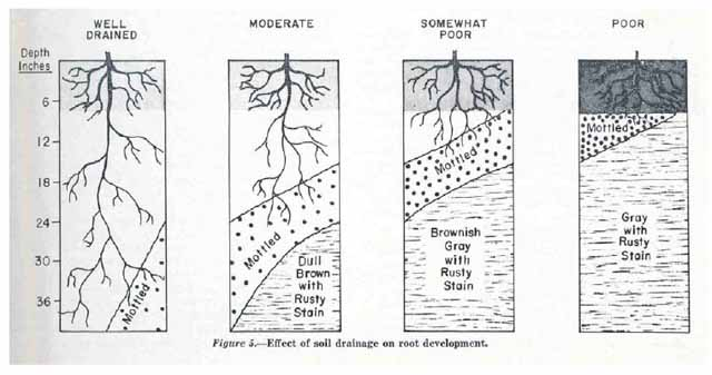 Printables Soil Profile Worksheet soil horizons worksheet abitlikethis layers drainage classes based
